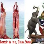 Osun Commences Construction Of Modern Abattoir For More Jobs