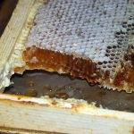 Osun Govt Acquires Land For Honey Production