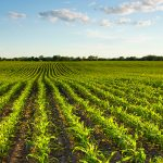 FG Releases 1000 Packs Of Herbicide To Osun Cassava Farmers