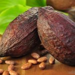 Osun Cultivates 1,500 Hectare Of Land For Cocoa