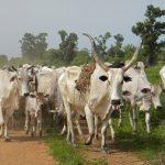 Herdsmen's activities, Nigeria's greatest challenge –Osun