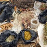 Osun Approves Establishment Of State Traditional Medicine Practitioners Board