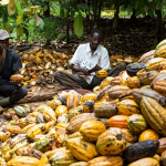 Tourists Storm Osun For Cocoa Festival