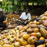 Tourists Storm Osun For Cocoa Festival