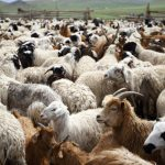 Goat And Sheep Training Workshop Holds Today
